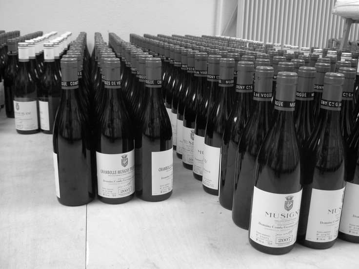 Rows of magic. Working 2009 vintage at Comte Georges de Vogue in Chambolle-Musigny, Burgundy.