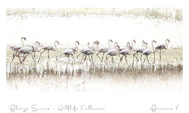 """""""Flamingo Sunrise"""" {Wildlife Collection} by Francoise V"""