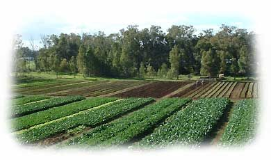 biodynamic fruit and vegetables