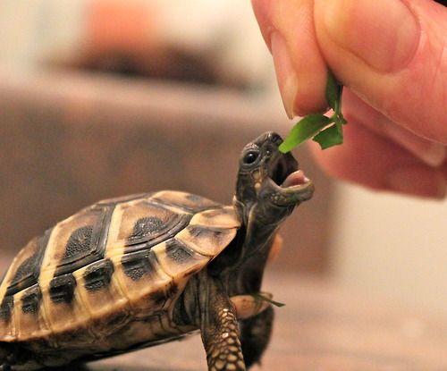 hehe aww cute wittle turtle (: