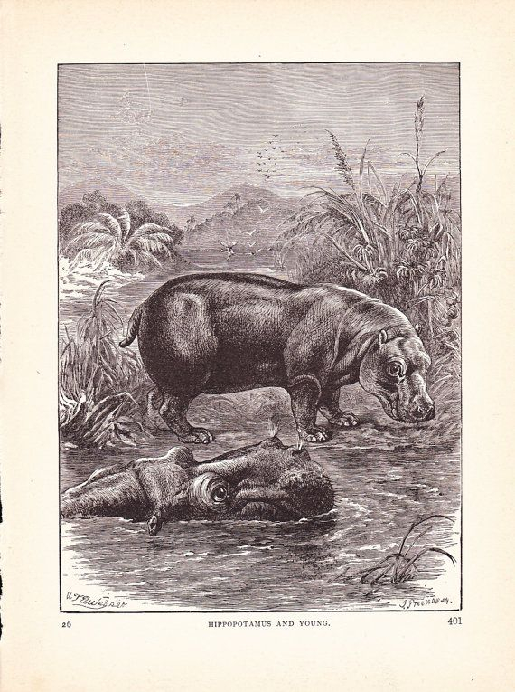 1880 Animal Print Hippopotamus Vintage Antique Home