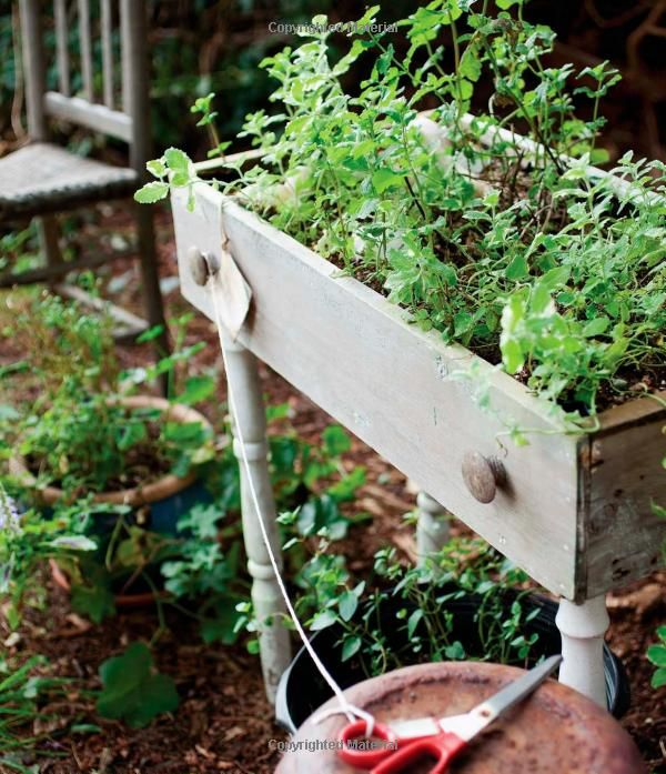 Fresh from the Farm: A Year of Recipes and Stories: Susie Middleton: 9781600859045: Amazon.com: Books Old dresser drawer with legs attached--brilliant raised planter!