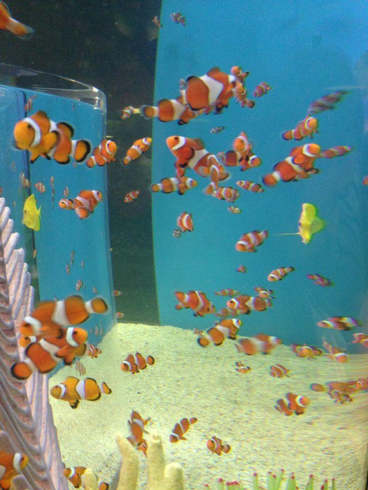Ripley's Aquarium of Canada in Toronto, ON