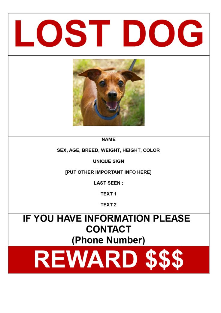 Found Dog Poster Template lost pet flyers - guvesecurid lost dog