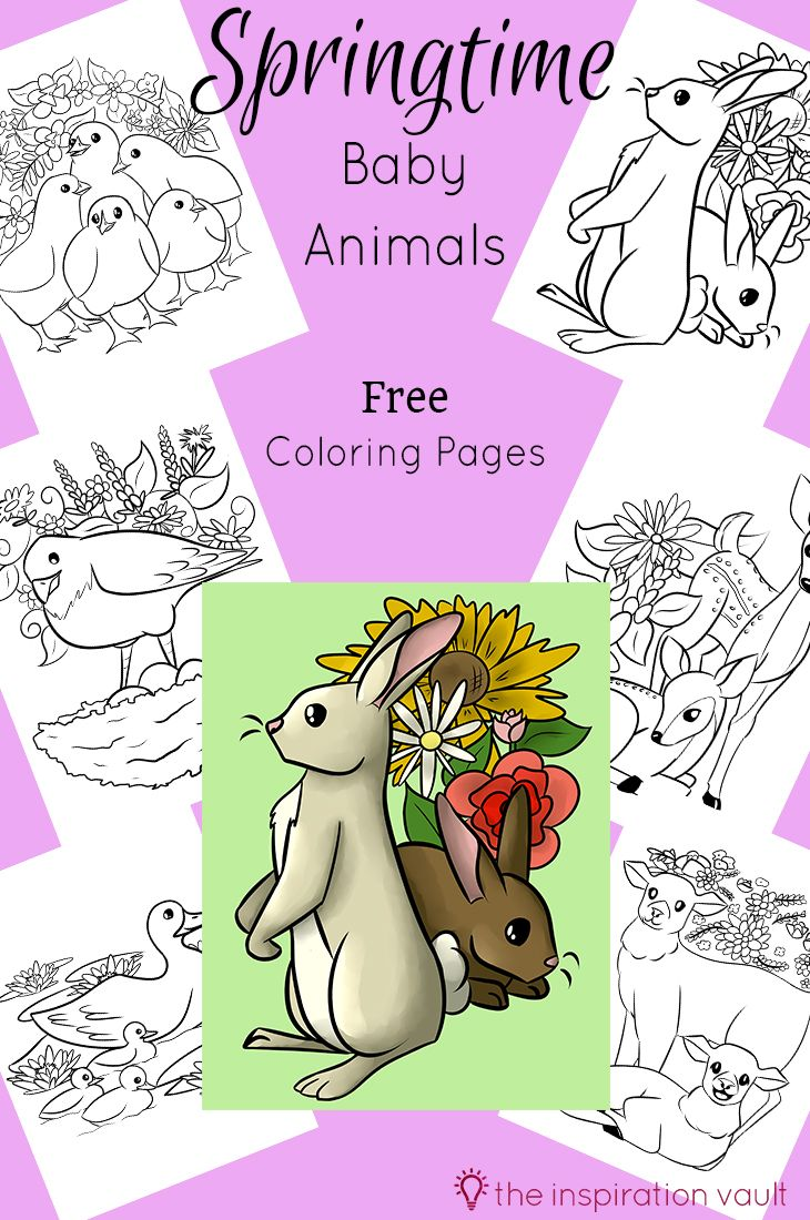 Spring baby animals coloring pages - Springtime Baby Animals Coloring Pages