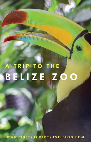 The Belize Zoo is a wonderful stop you can make in route from the airport over to San Ignacio. Call to plan your next Belize trip 844-9-UNPLUG or visit us at centralamericavacation.com to see more Belize travel packages.
