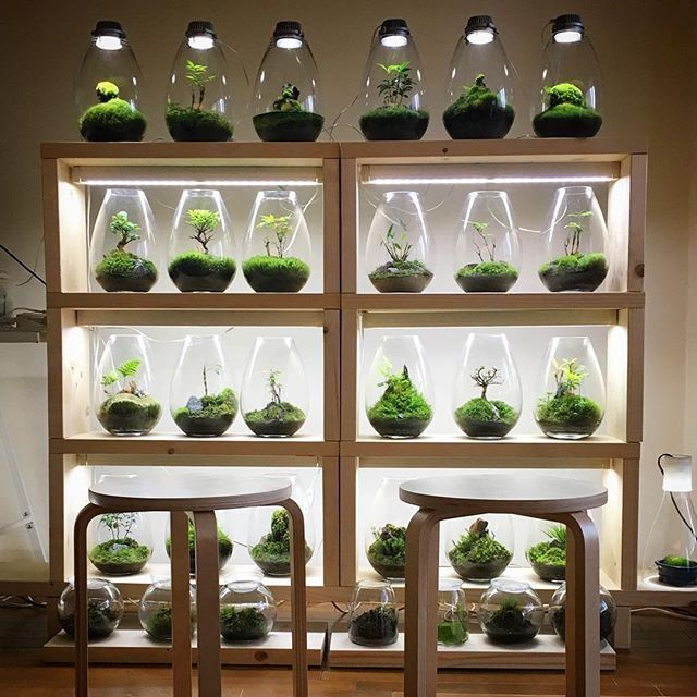 moss light-Terrarium