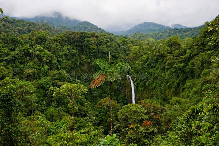 Here is a complete overview of the tropical rainforest biome, rain forest health, habitat, and these forests' importance to our earth. Misty Landscape View Across A Forest Valley With Hills In Fog Mixed Together In Affiliate View Forest Congo Rainforest Rainforest African Rainforest