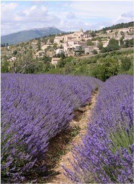 Grasse, capitale mondiale du parfum France !!!