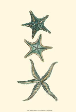 Aquamarine Starfish I Reproduction d'art