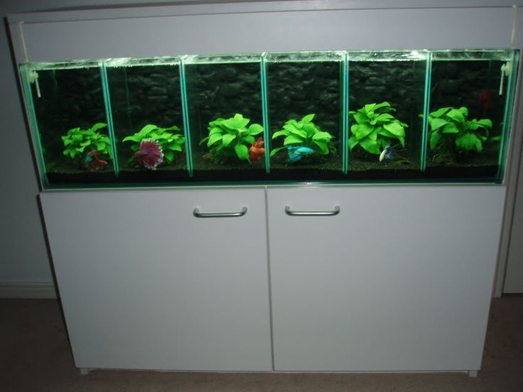 Dream betta tank
