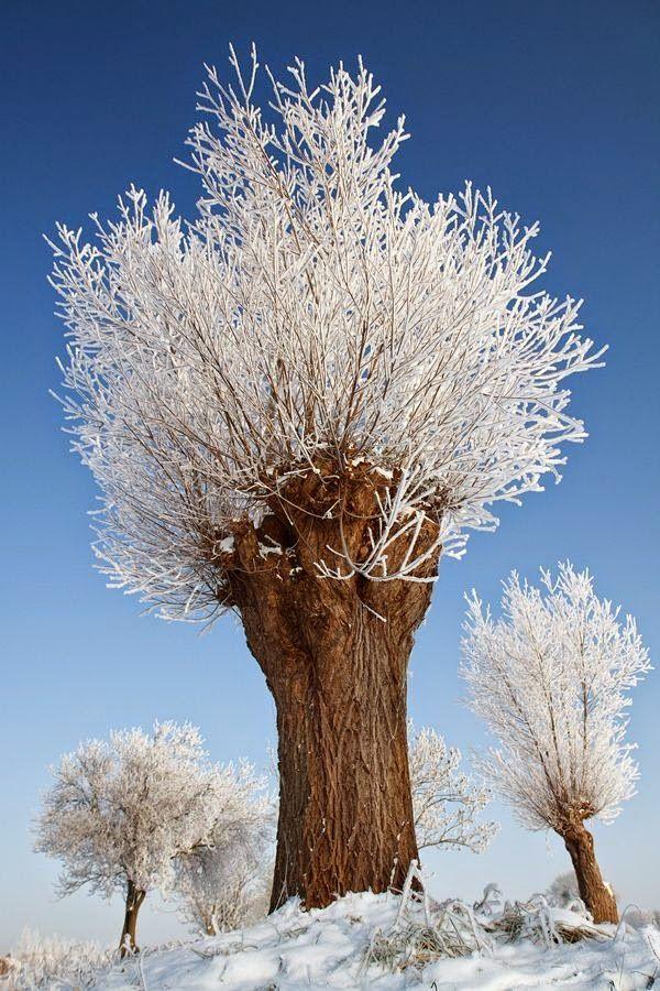 Snowy erstaunlicher Baum