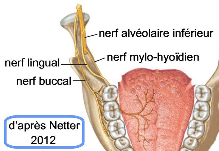 Résultats de recherche d'images pour «anesthésie de la bouche site injection»