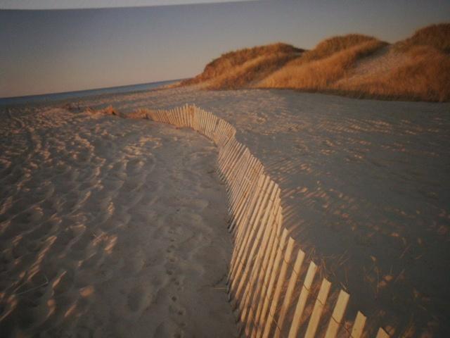 Noordzee - Ostende - Dune - Polders