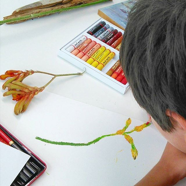 Leaves & Seeds Drawing Workshop from 11th Jan 2017,  Australian Botanic Garden, Mount Annan. Kangaroo Paw drawing by 10 year old Rishad, using oil pastels and colour pencils. Such beautiful work! Thank you to our forager Melissa Slarp @ Australian Botanic Garden for the Kangaroo Paw, awesome find!