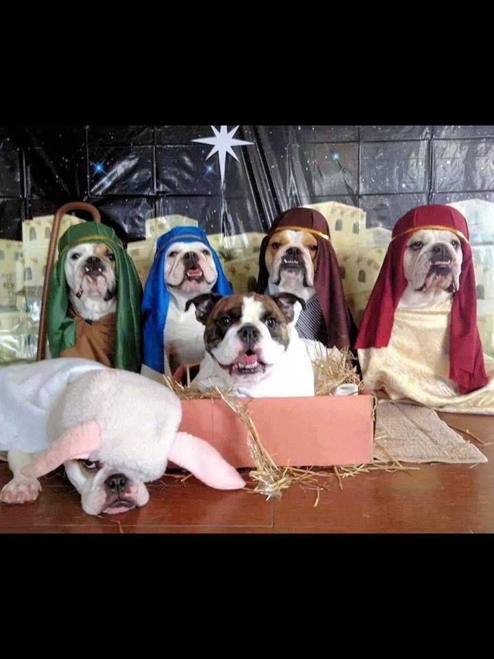 Christmas Humor: Dogs doing the Nativity Scene! The lamb looks rather displeased...