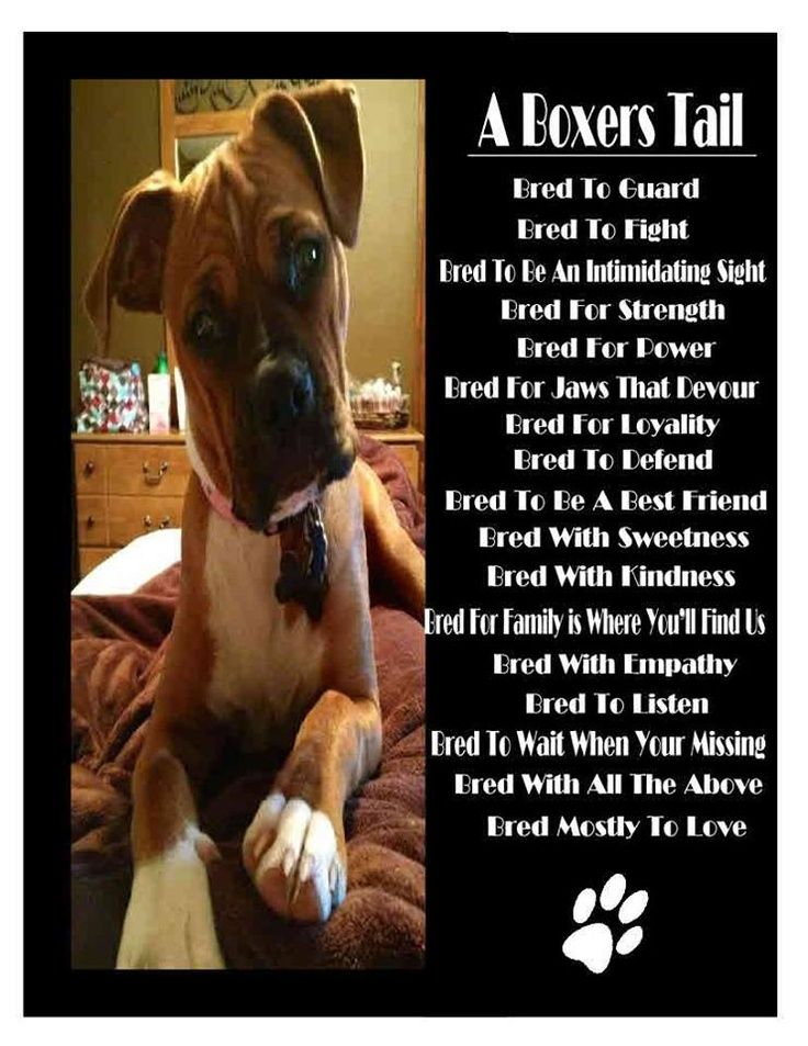 Boxers have a lover's soul and a warrior's heart. Best dogs ever. @Misty Schroeder Murphy
