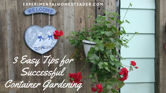 Growing plants in containers doesn't have to be difficult. Here are several tips for creating a wonderful hanging basket or container garden this summer.