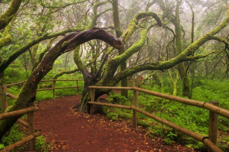 Bosque 'El Cedro', Parque Nacional de Garajonay (La Gomera). Foto. Cedida por Turismo Canarias