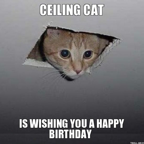 Memes Vault Funny Happy Birthday Meme with Cats