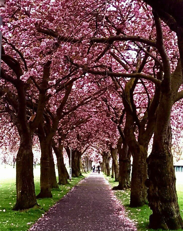 I love walking through the Meadows in spring!