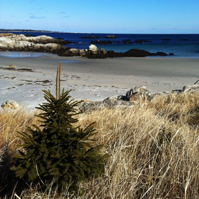 A lonely tree at Isaac's Cove, Kejimkujik Seaside Park, Port Joli, Nova Scotia. Can't seem to get enough of this place.