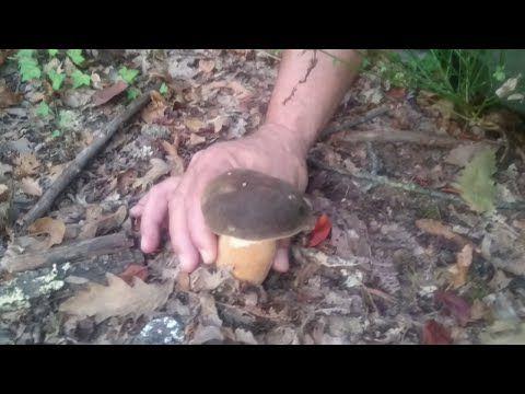 funghi porcini spettacolari 30 agosto - YouTube
