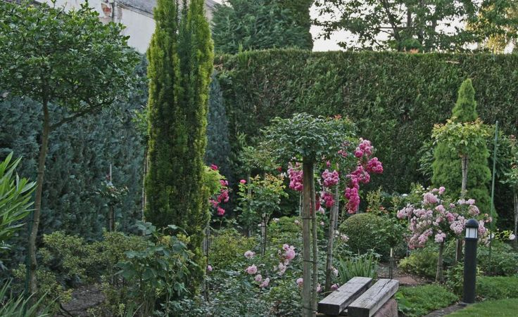 Die Säulen-Eibe (Taxus baccata 'Fastigiata') setzt mit ihrer schmalen und streng aufrecht wachsenden Krone markante Akzente im Garten