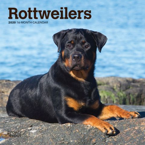 Rottweilers 2020 Calendars Intelligent And Loyal The Rottweiler