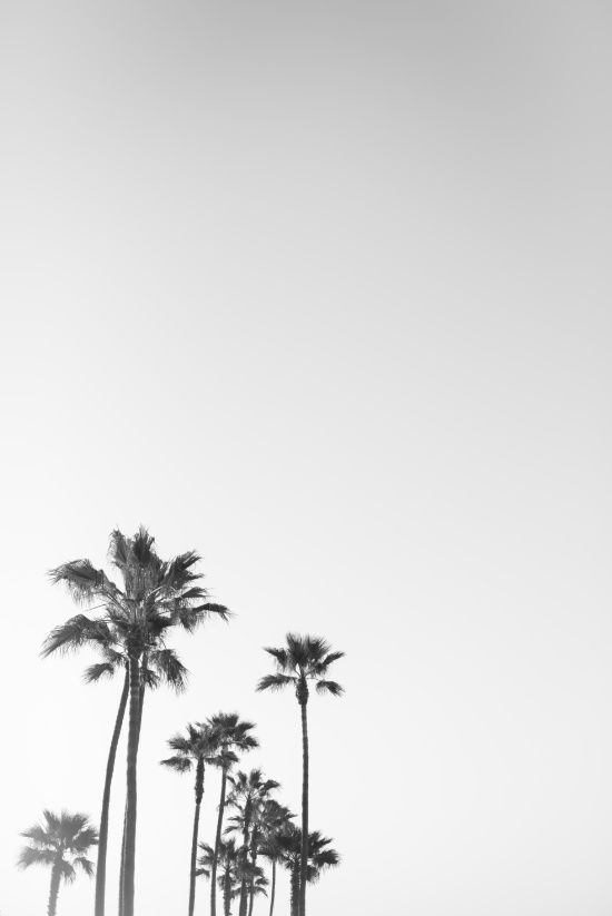 Black and White California Palms Art Print