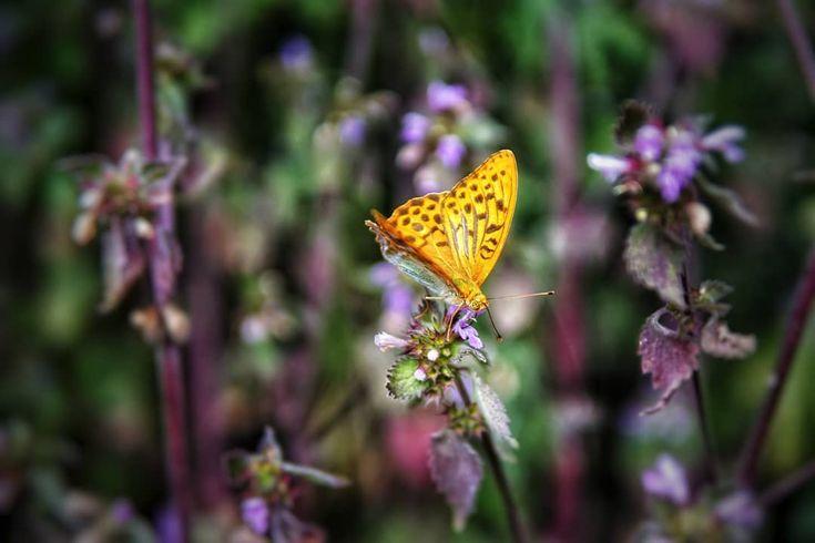SCHMETTERLING 🦋 // TEIL 3. . . . #Natur #Natur #Naturfotografie #Fotografie #Landschaft