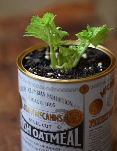 growing things in tins