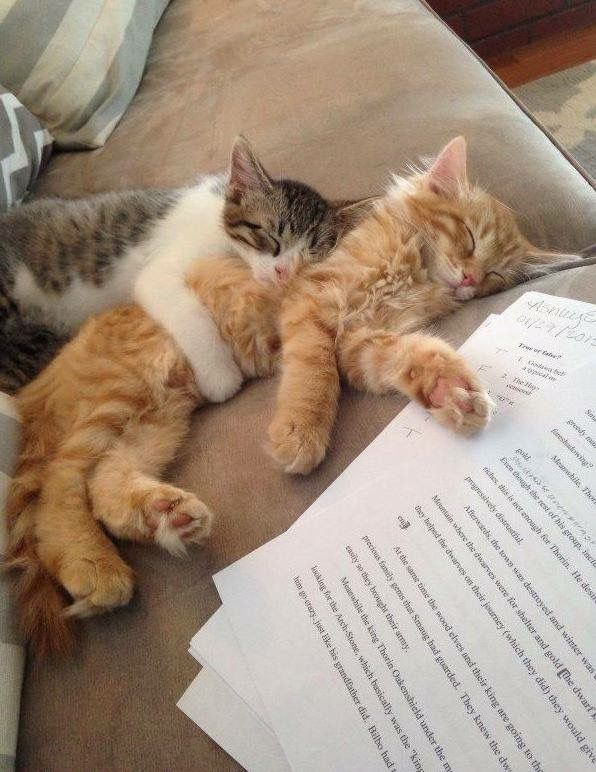 We'll help you wit your writin'... right after our nap...zzzzz