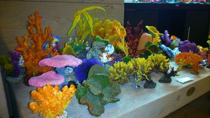 Prachtig kunst koraal voor in het aquarium