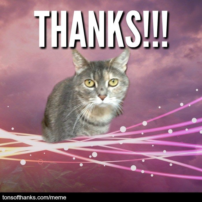 51 Nice Thank You Memes With Cats Thanks Meme Cats Cat Memes