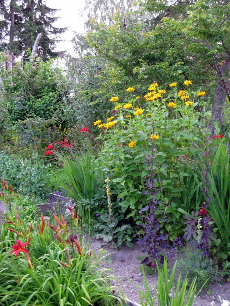 27 best natural wild garden images on Pinterest Flower gardening