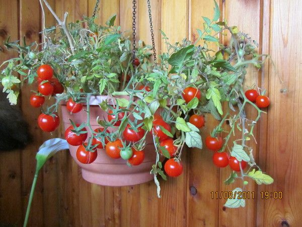 Идеи озеленения балкона - Nebka.Ru