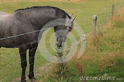 The Grass Is Always Greener - Download From Over 38 Million High Quality Stock Photos, Images, Vectors. Sign up for FREE today. Image: 62701425