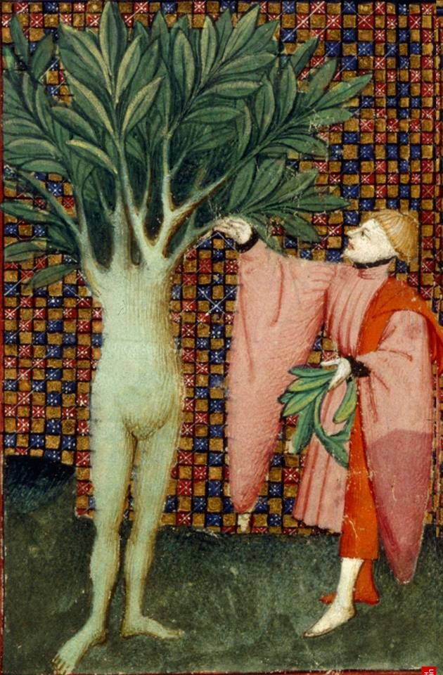 Love a tree. Daphne, half-woman and half- laurel tree with Apollo The Book of the Queen, c 1410-c 1414, Harley MS 4431, f. 134v, The British Library. http://www.bl.uk/manuscripts/Viewer.aspx?ref=harley_ms_4431_f134v