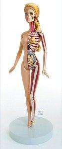 Les dessous anatomiques d'une vraie poupée Barbie - NerdPix