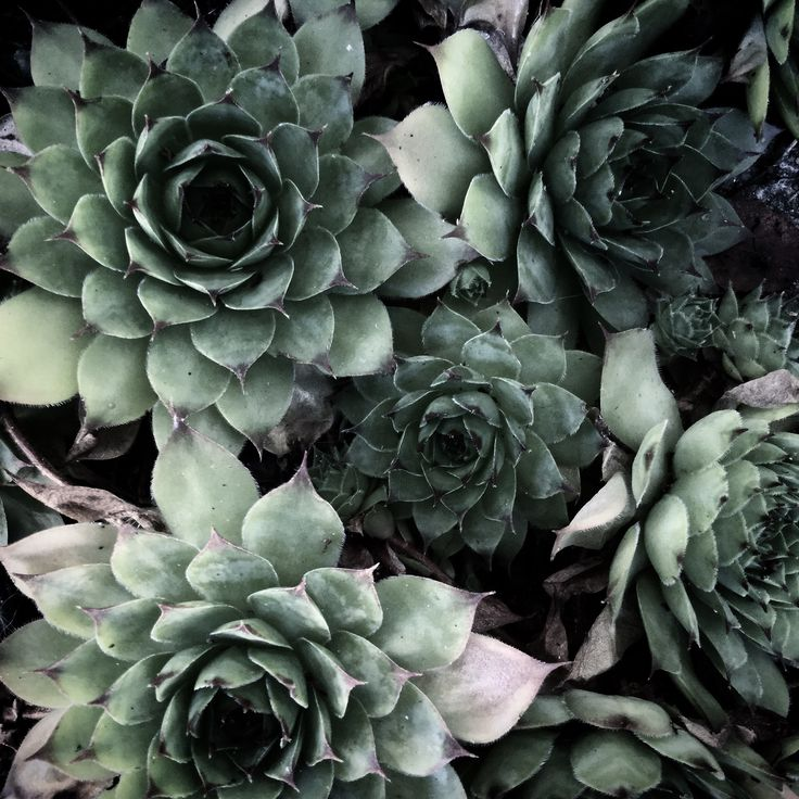 A passion for succulents!