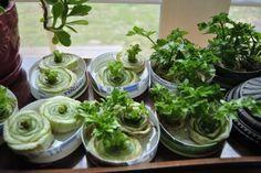 10 plantas que pueden volver a crecer en agua | Notas | La Bioguía