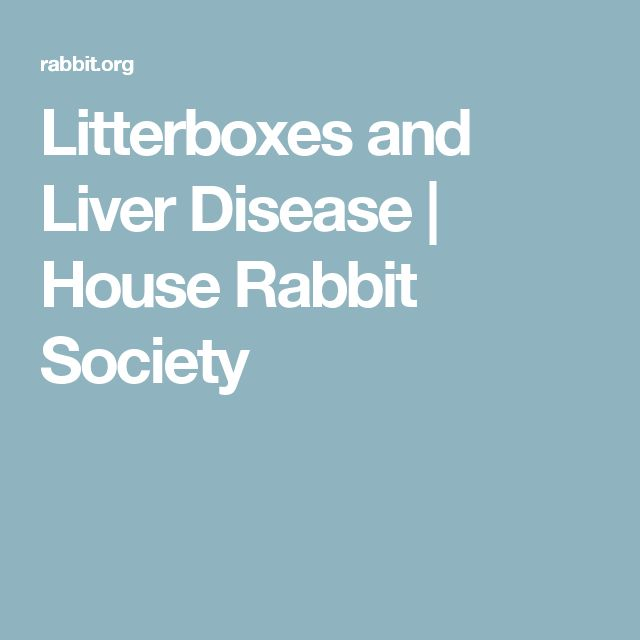 Litterboxes and Liver Disease | House Rabbit Society