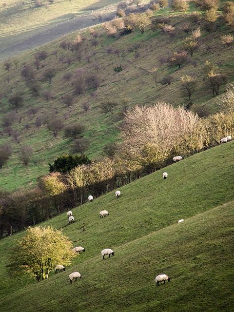 The Ridgeway, Southern England, UK