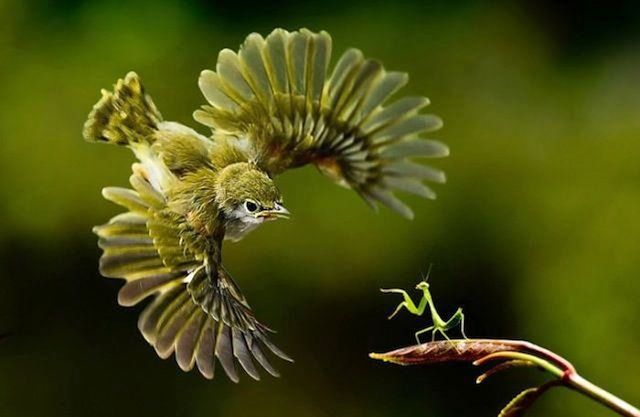 20 Perfectly Timed Wildlife Photos