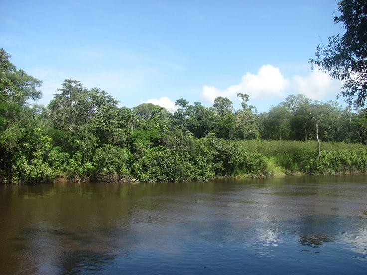 Sabias que La reserva de Pacaya Samiria su objetivo es conservar los ecosistemas representativos de la selva baja de la amazonia peruana, preservar su diversidad genética. Proteger especies de flora y fauna de la amazonia.