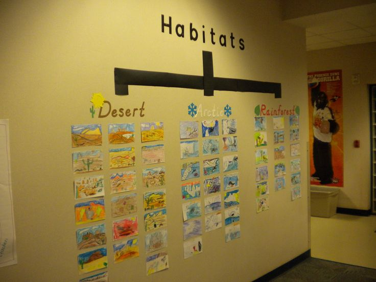 Writing Thinking Maps | tree map we completed after studying the desert, arctic, and ...