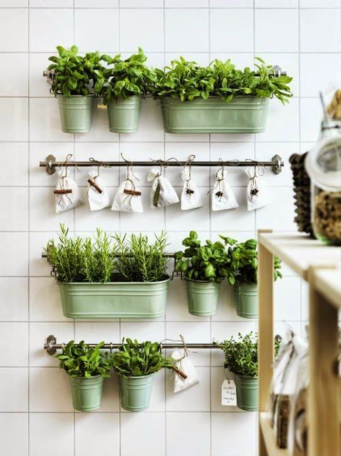 Small world of design: Inspiracje: Przechowywanie świeżych ziół w kuchni