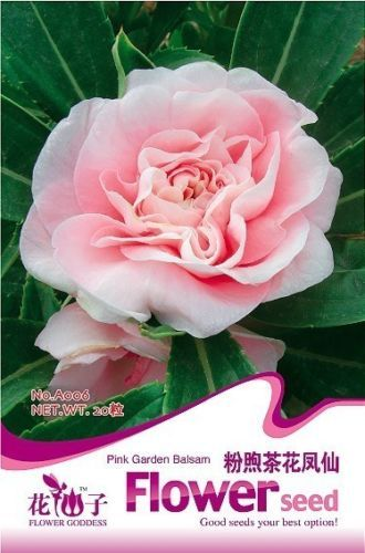 20-Seeds-1-Pack-Pink-Garden-Balsam-Seed-Camellia-Flower-Seed-A006-Free-Shipping