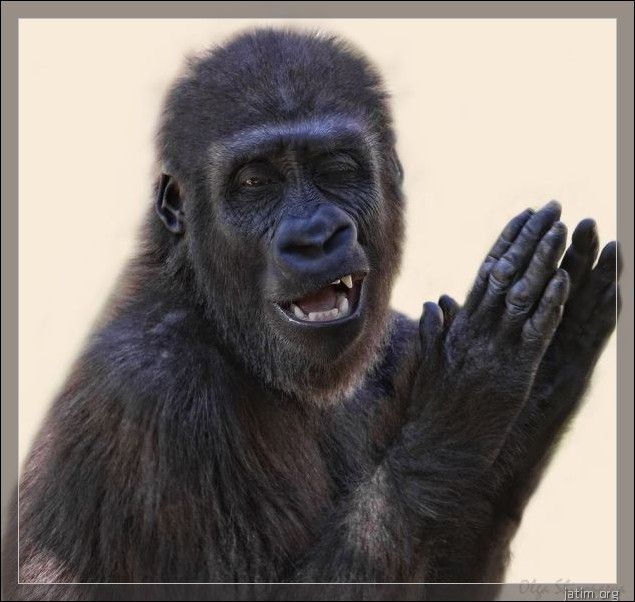 Funny Applause Meme : Funny applause gorilla character casting for my reviews